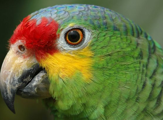 Police take parrot into custody following a police raid targeting crack dealers image
