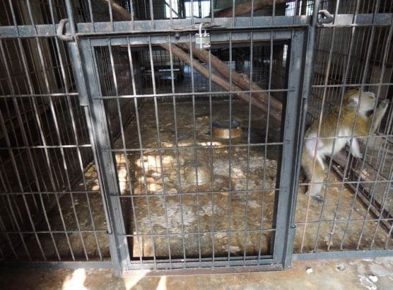 'Monkey dungeon' discovered in US zoo image